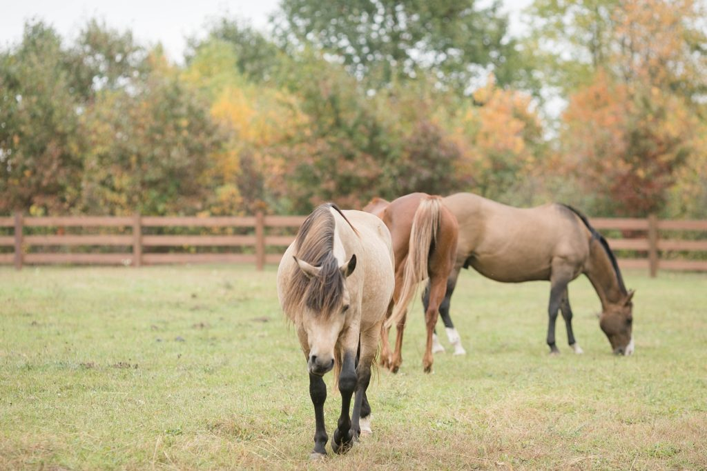 horses in the pasture at Lilydale in Chippewa Falls